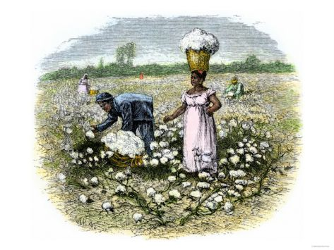 Picking Cotton on a Plantation in the Deep South, c.1800.