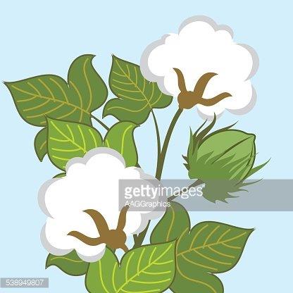 Cotton Plant Closeup premium clipart.
