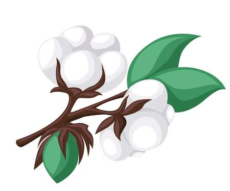 4,836 Cotton Plant Stock Vector Illustration And Royalty Free Cotton.