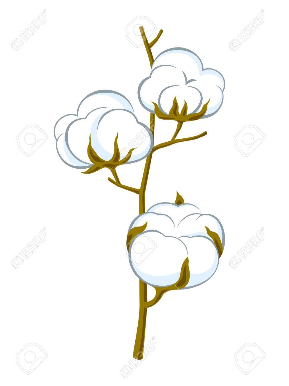 cotton brunch on white background.