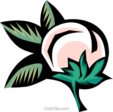 cotton plant Royalty Free Vector Clip Art illustration.