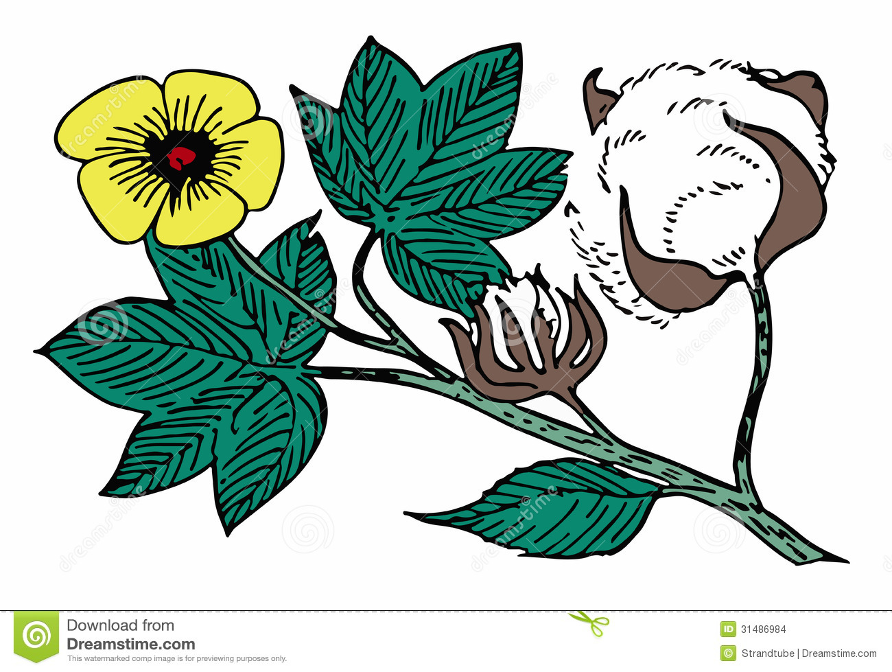 Clip Art Of Cotton Growing Clipart.