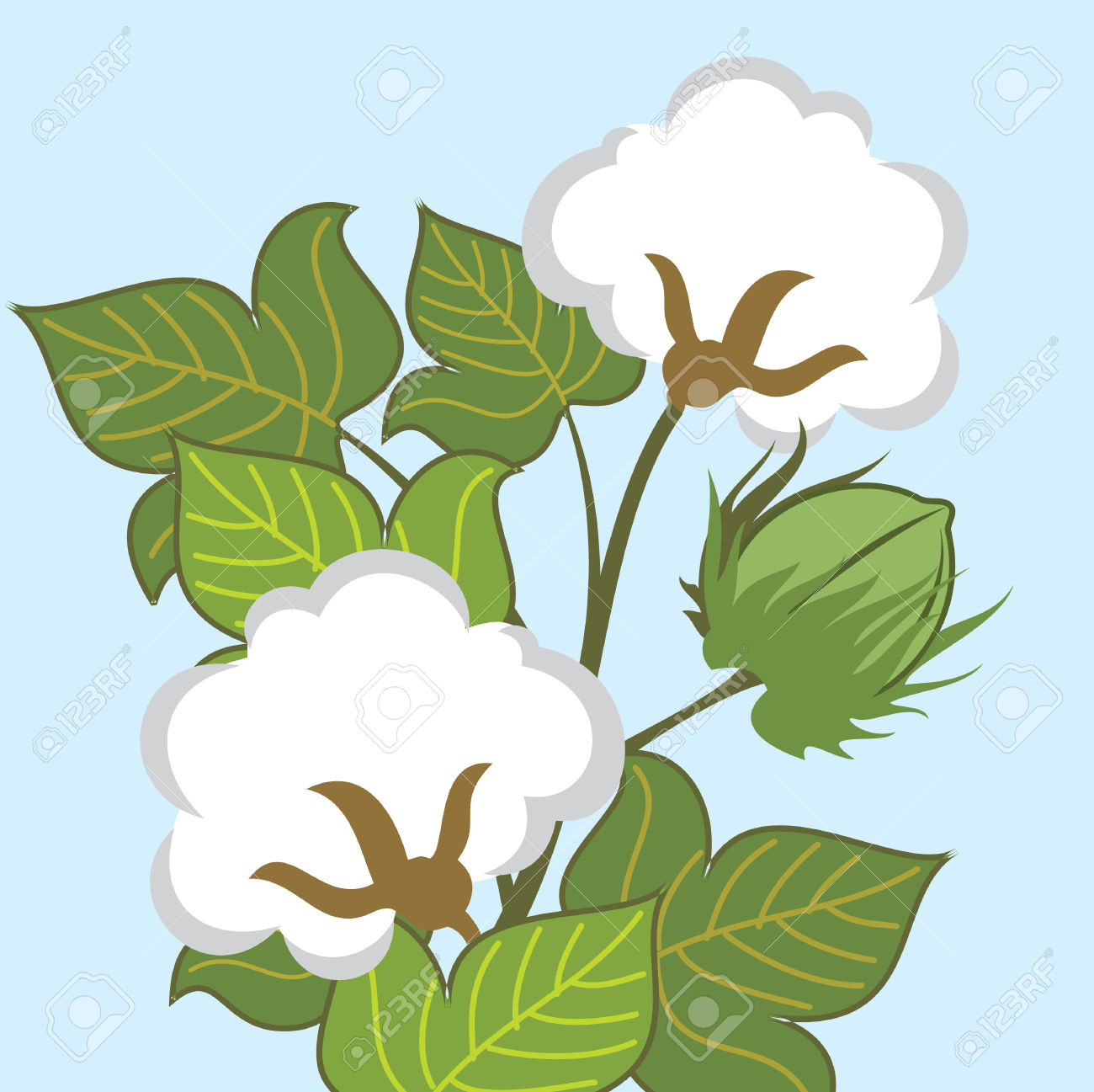 Cotton Plant Closeup Royalty Free Cliparts, Vectors, And Stock.