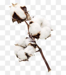 Cotton Plant PNG Images.