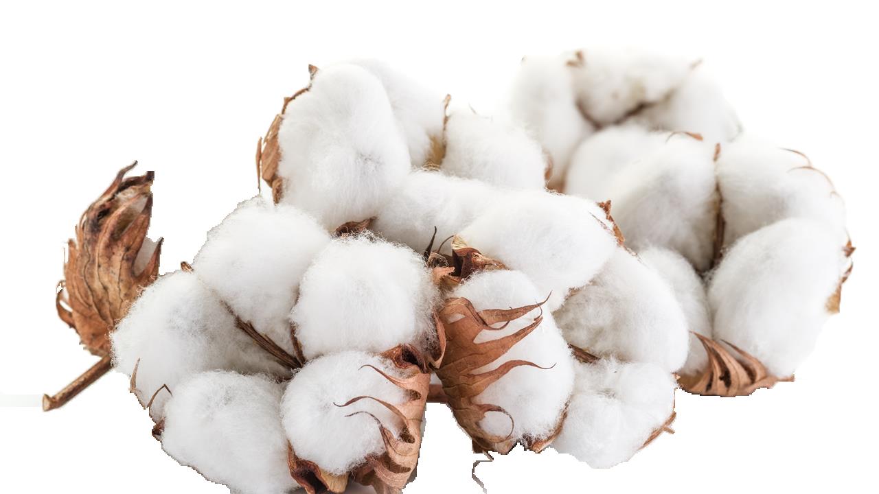 Cotton Transparent File.