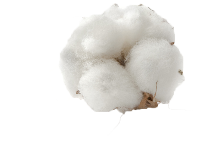 Cotton PNG Background Image.