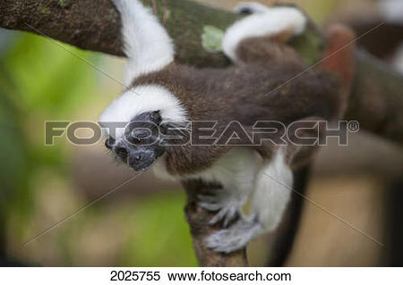 Stock Image of A Cotton.