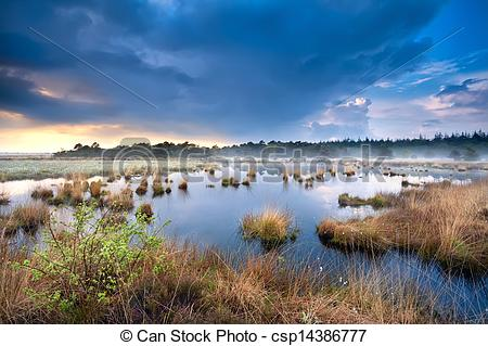 Picture of blue stormy sky over swamp with cotton.