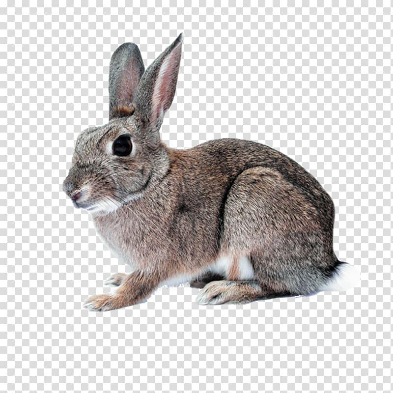 Hare Domestic rabbit White Rabbit Cruelty.