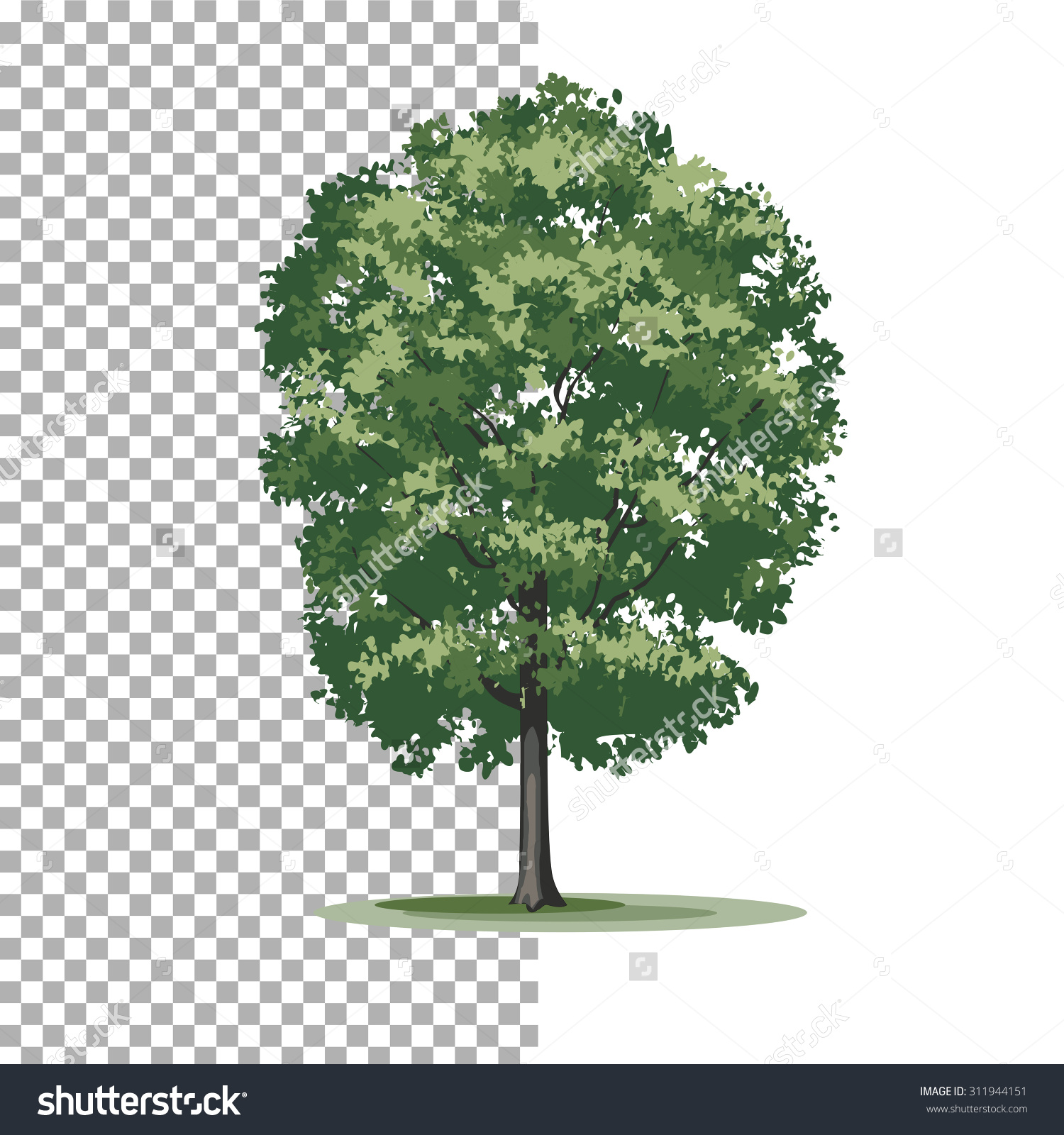 Eastern Cottonwood Tree Isolated Vector Illustration Stock Vector.