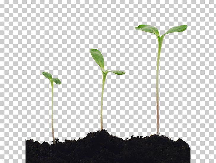 Stock Photography Plant Seedling Common Sunflower.