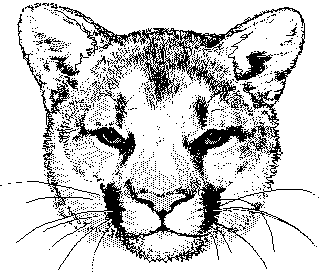 Free Cougar Clipart Black And White, Download Free Clip Art.