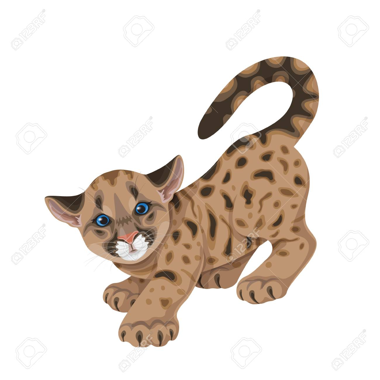 Cougar Cub in Motion Isolated » Clipart Station.