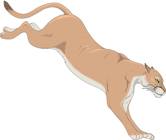 Cougar Clipart.