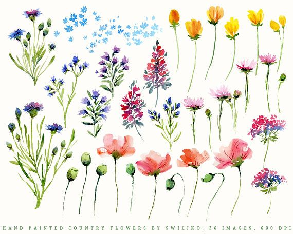 Digital Watercolor Florals Country Flowers Clipart hand in.