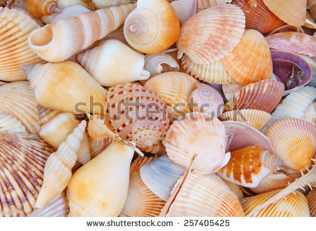 Snail seashell free stock photos download (178 Free stock photos.