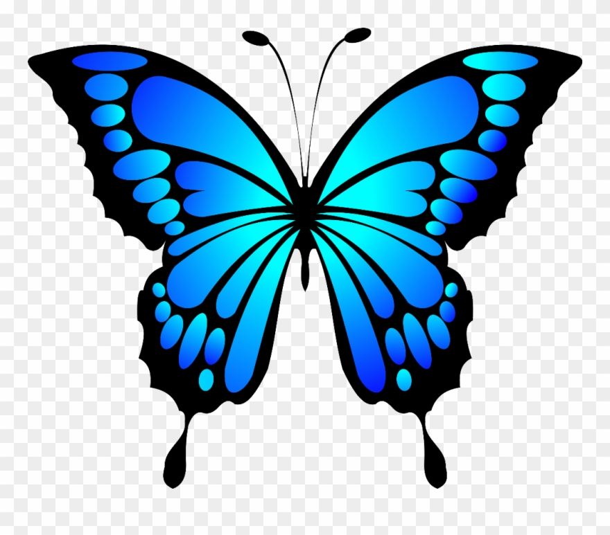 Clip art buttyerfly Transparent pictures on F.
