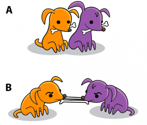 Fig. 2.27. Puppies demonstrating covalent bonding (A) The.