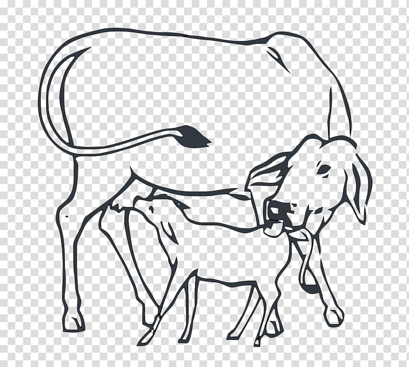 Cattle Cow.