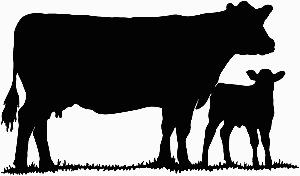 Cow calf clipart.