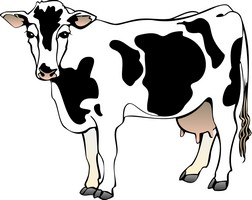 Cow and bull clipart.