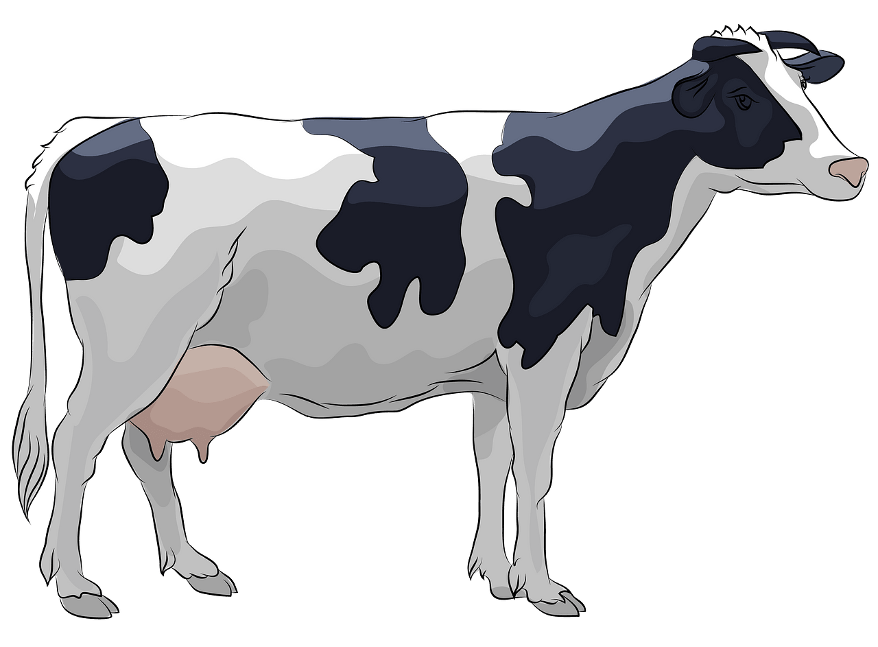 Holstein Cow clipart. Free download..