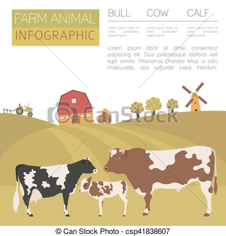 Cattle farming infographic template. Cow, bull, calf family. Flat design.