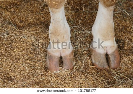 Cow Hoof Stock Images, Royalty.