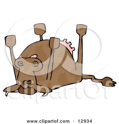 Dead Cow Lying on its Back, its Feet Strait up Clipart.