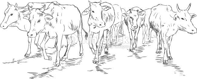 Cow herd clipart.