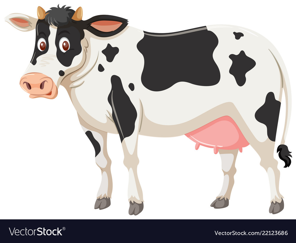 A cow on white background.
