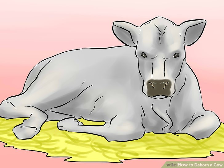 10136 Cow free clipart.