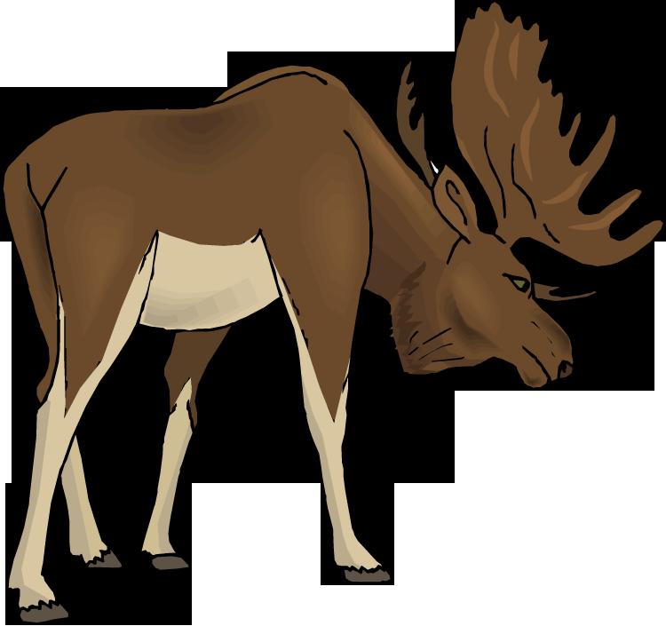 Moose Clip Art & Moose Clip Art Clip Art Images.