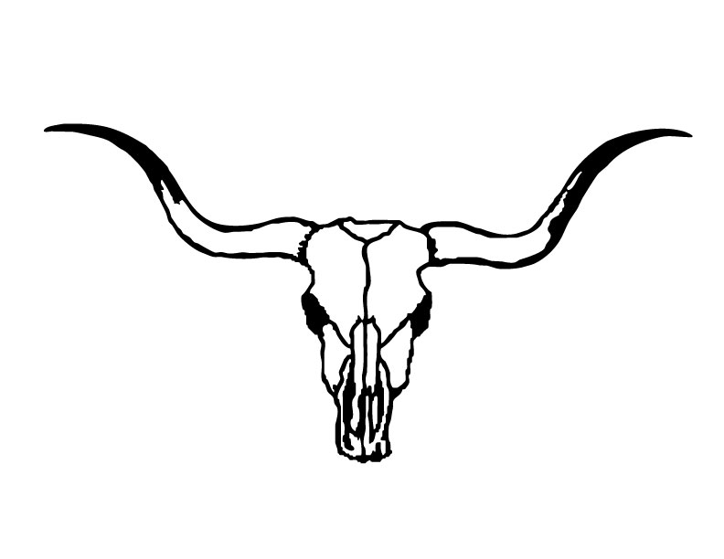 Cow Skull Drawing.