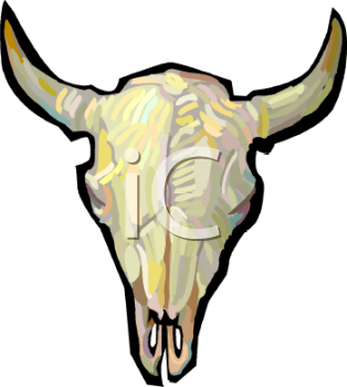 Cow Skull with Horns.