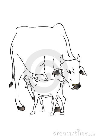 Cow and calf clipart.