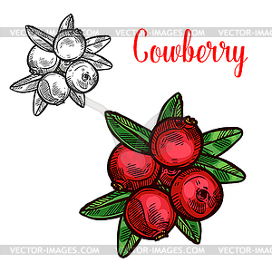 Cowberry sketch fruit berry icon.