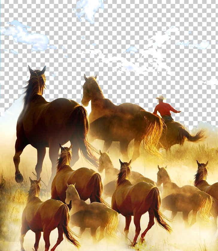 Stock Horse Cowboy Ranch Rodeo PNG, Clipart, Advertising.