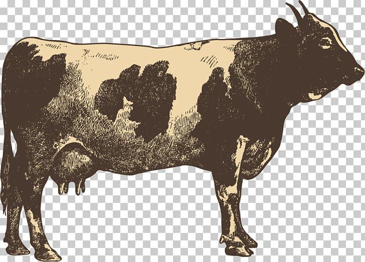 Campylobacter jejuni Blandford Fair Cattle Transmission Food.