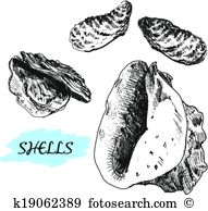 Cowrie Clipart Vector Graphics. 29 cowrie EPS clip art vector and.