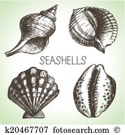 Cowrie shell Clipart Vector Graphics. 36 cowrie shell EPS clip art.
