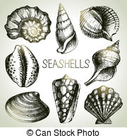 Cowrie shell Vector Clip Art Royalty Free. 37 Cowrie shell clipart.