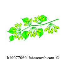 Cowslip Clip Art and Illustration. 16 cowslip clipart vector EPS.