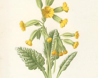 botanical images.