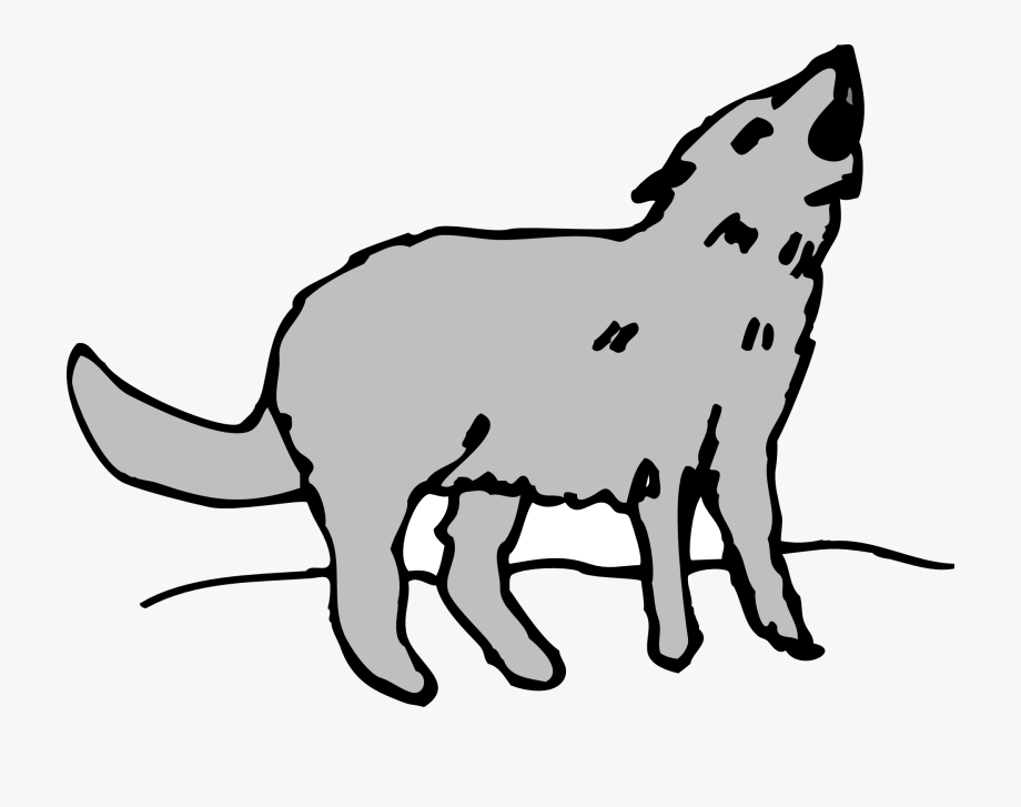 Coyote Drawing Howling.