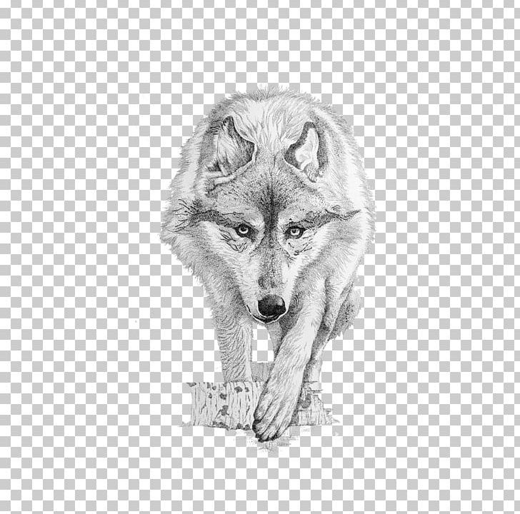Gray Wolf Coyote Drawing PNG, Clipart, Angry Wolf Face, Animal.