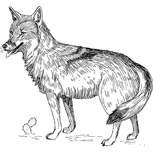 Coyote clipart, cliparts of Coyote free download (wmf, eps.