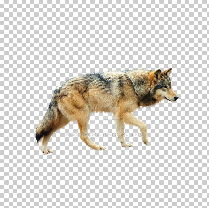 Dog Coyote Mexican Wolf Tundra Wolf Red Wolf PNG, Clipart, Animals.