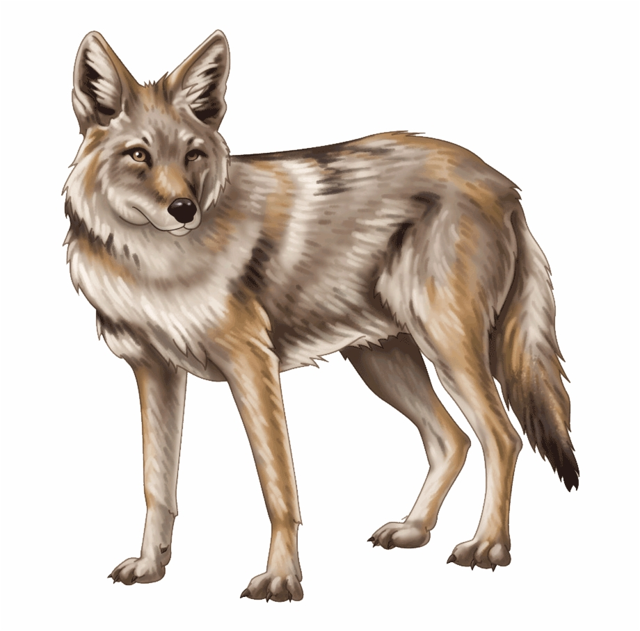 Coyote Clipart Transparent Background {#1435521}.