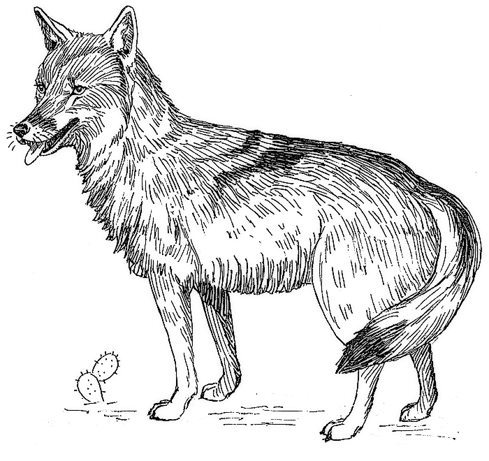 Free Coyote Clipart, 1 page of Public Domain Clip Art.